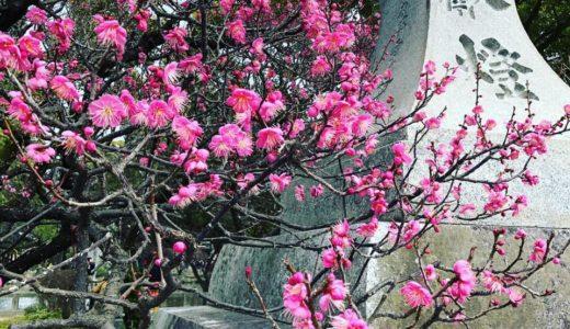 梅の花を楽しみに・・・。
