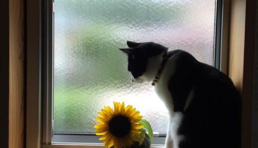 窓辺とネコ